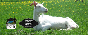5 Benefits Of Goat Milk Soap