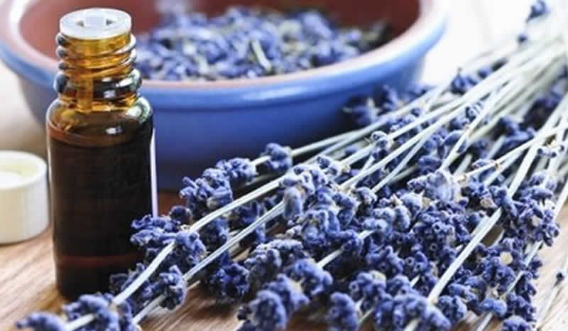 Organic essential Oil vs Organic fragrance Oil