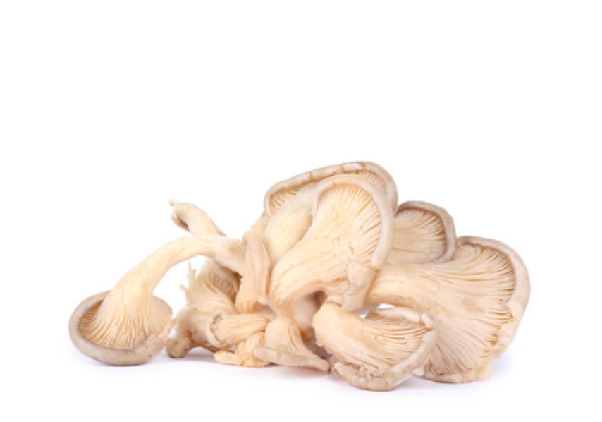 Snow Oyster Mushroom Grow Kit