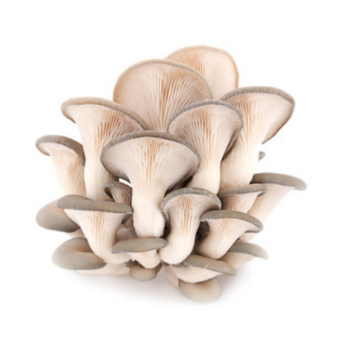 Blue Oyster Mushrooms from Hernshaw Farms in West Virginia