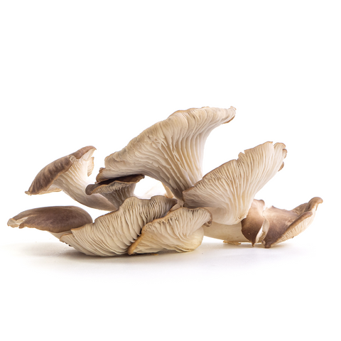 Italian Oyster aka Lung Oyster Mushrooms from Hernshaw Farms in West Virginia