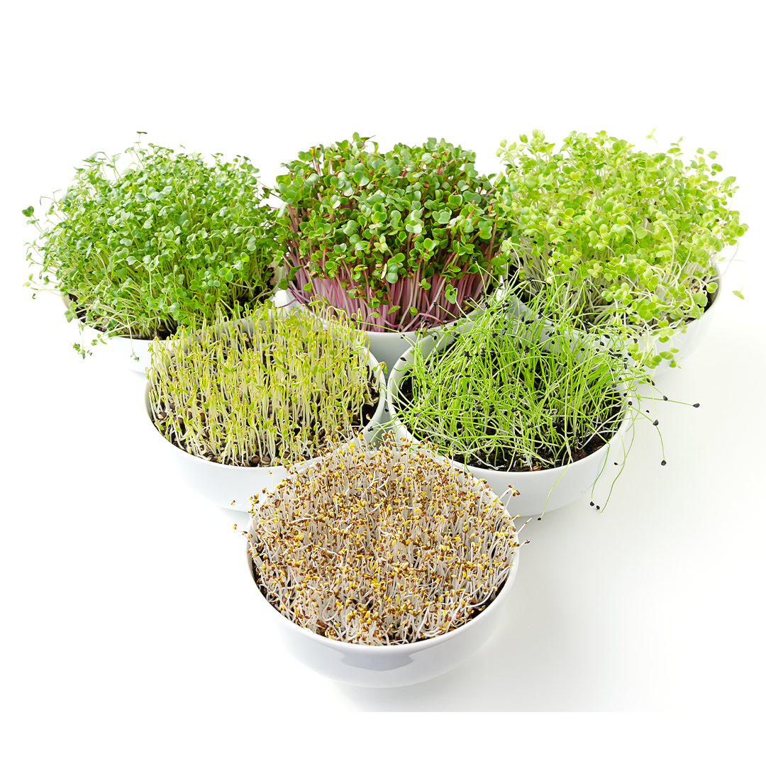 micro greens grow kit from Hernshaw Farms in West Virginia