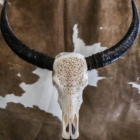 Cow Skull - Indian Eagles