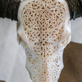 Buffalo Skull - Tribal Carving 2