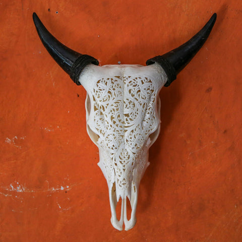 Buffalo Skull - Plain White