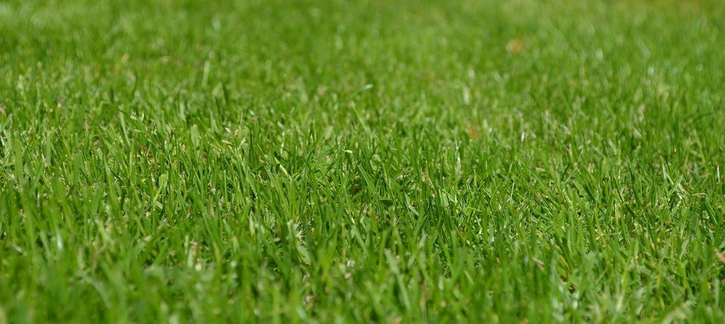 IT'S TIME FOR A SPRING LAWN CHECK-UP