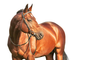 Vitamin & Mineral Supplements - Equine Passion