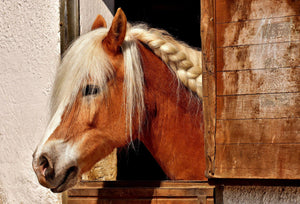 Stable - Equine Passion