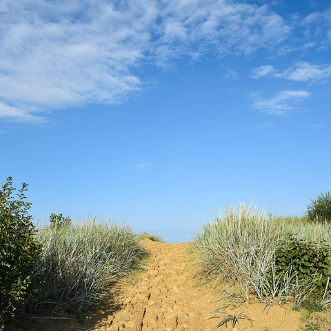 Beachy, sandy pathway with beach grass on the sides, blue sky and clouds.