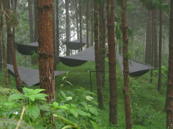 a forest of hammocks