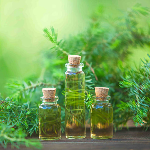 Best Tea Tree Oil for Acne in India 2021