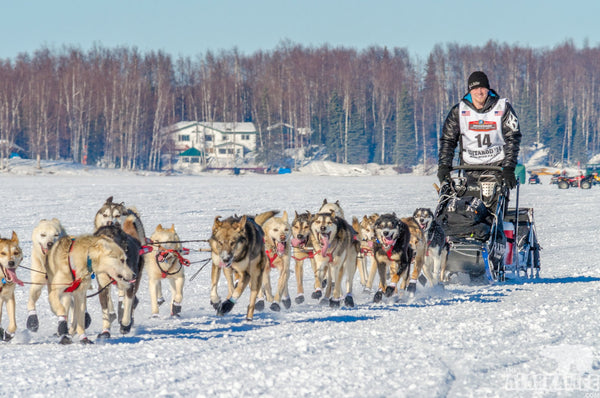 Dallas Seavey - Musher Profile - An Alaskan Phenom