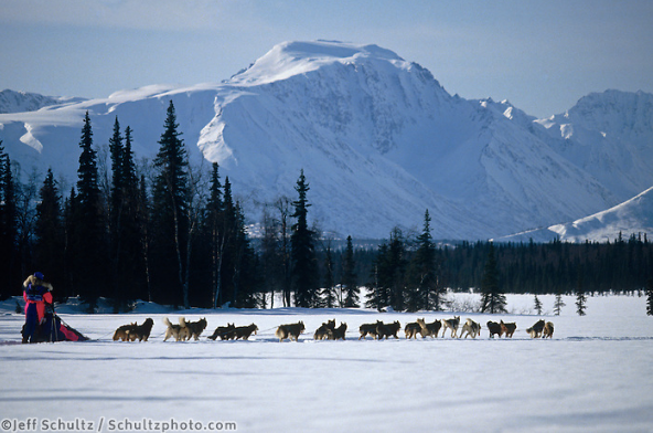Iditarod 2020 - March 12th