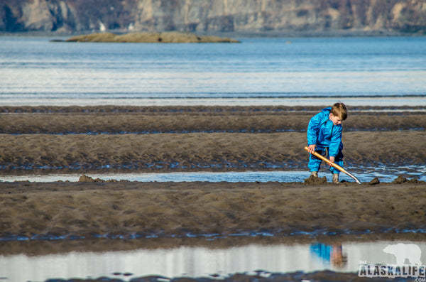 Alaska Clamming - Digging Razor Clams