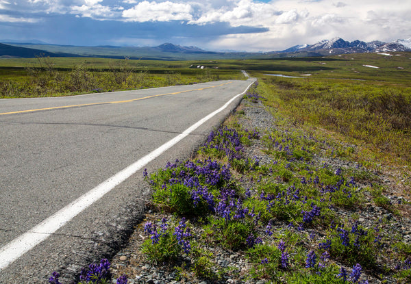 Alaska's Denali Highway Rated Among Top 10 Greatest Drives In America
