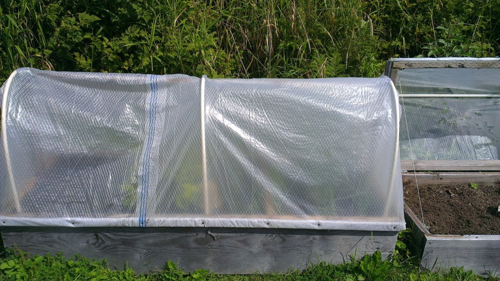 Closed Cold Frame Gardening