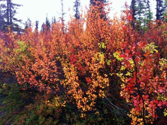 hunting trips measuring success fall colors