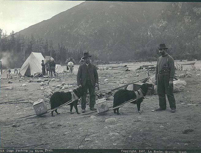 Two Klondikers with dogs packing supplies along the Chilkoot Trail near Dyea, Alaska, 1897. Alaska Ghost Towns.