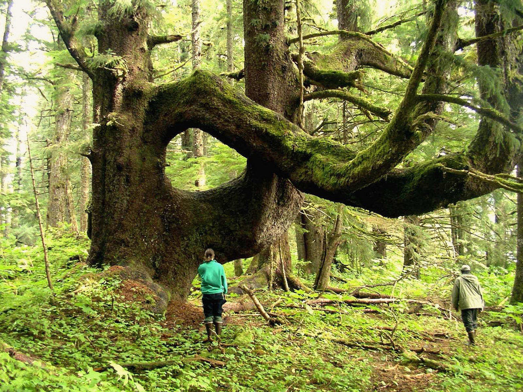 The heart of the Tongass National Forest on Admiralty Island