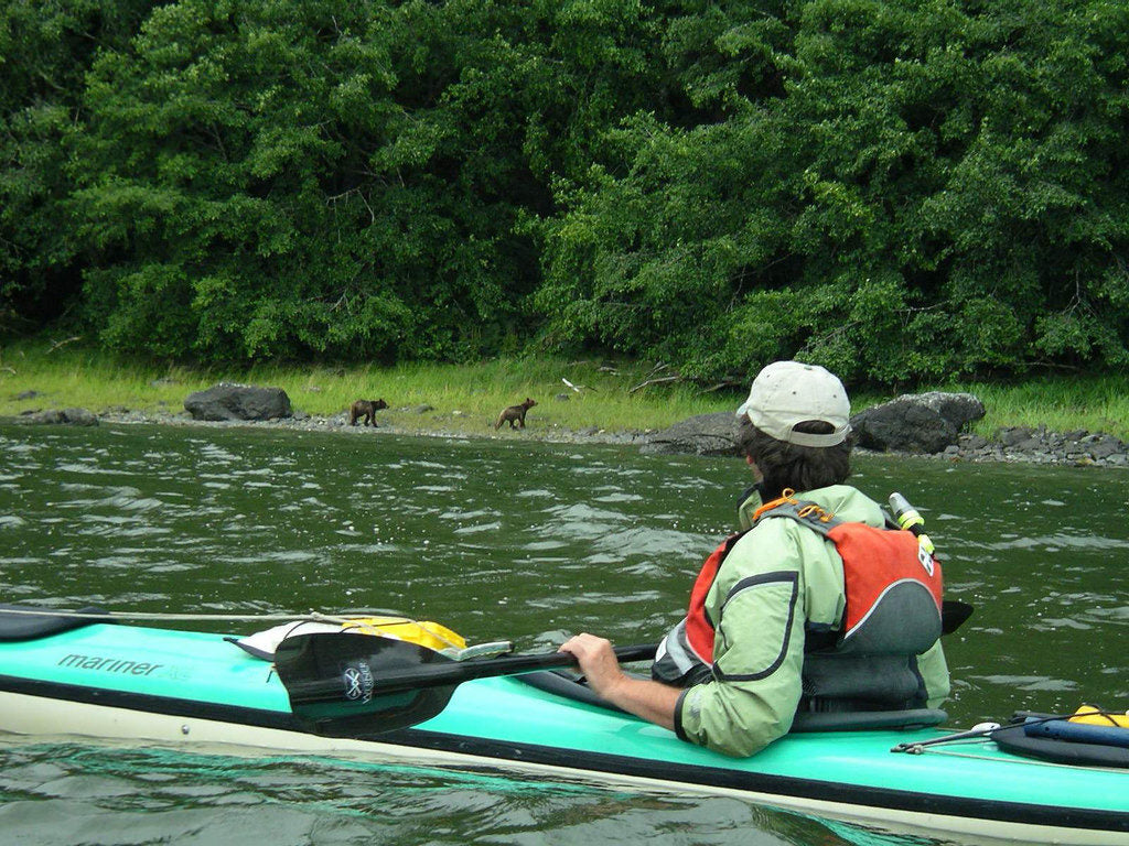 Brown bear viewing from a kayak