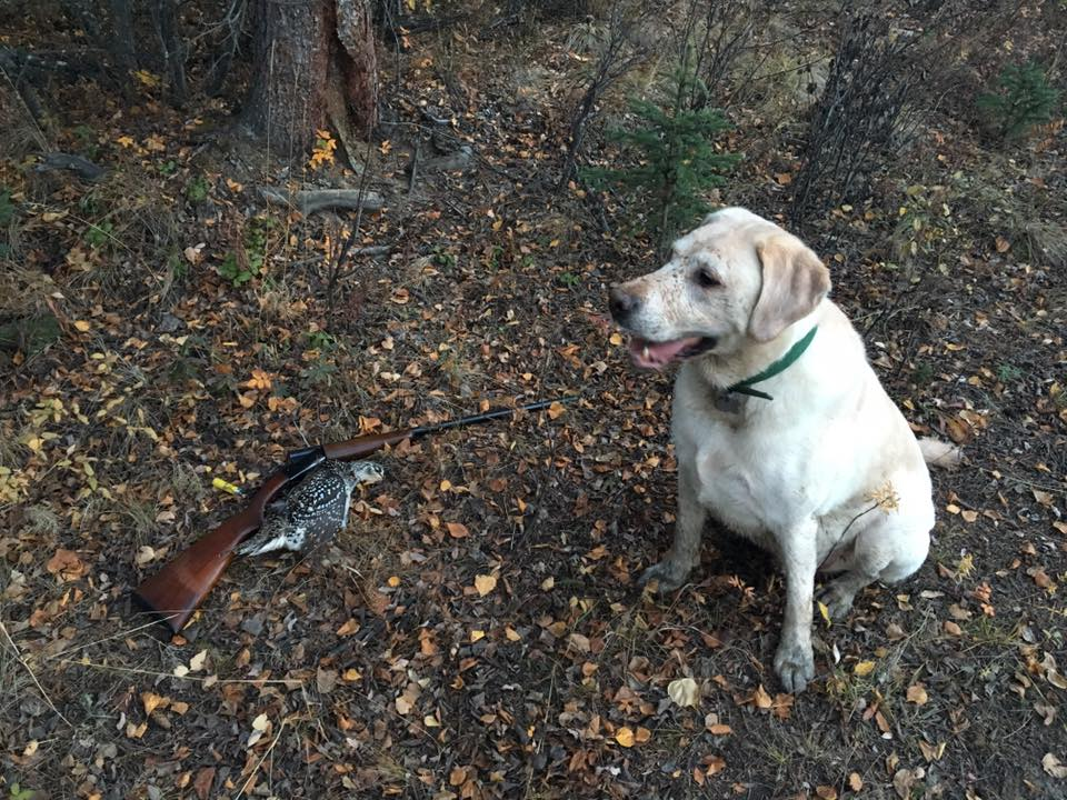 an image of Mike Rogers Model 37, lab and a grouse