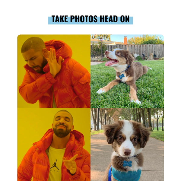 Drake doesn't like photos of the side of a dog's face. Drake likes photos taken head on looking right at your pup.