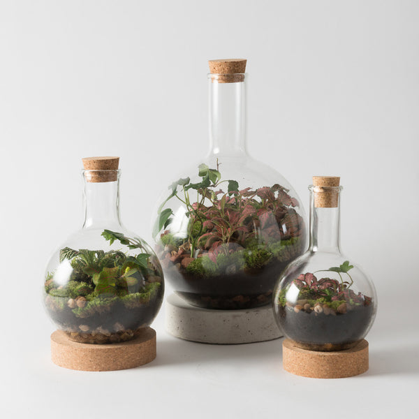 Boiling Flask Terrariums