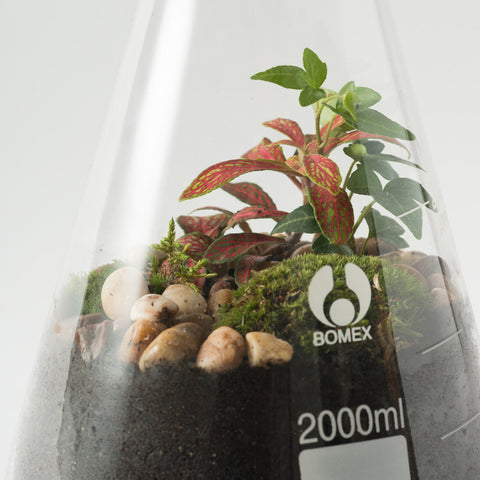 Conical Flask Terrarium - TEMPORARILY SOLD OUT