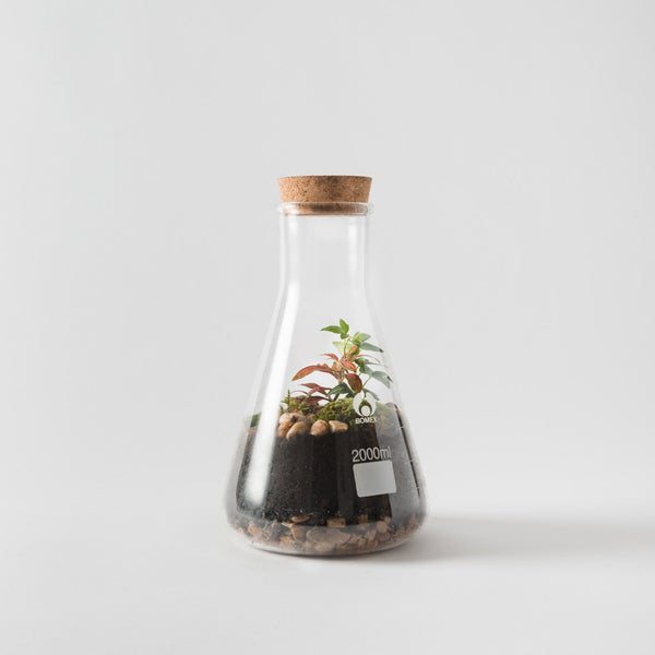 Conical Flask Terrarium