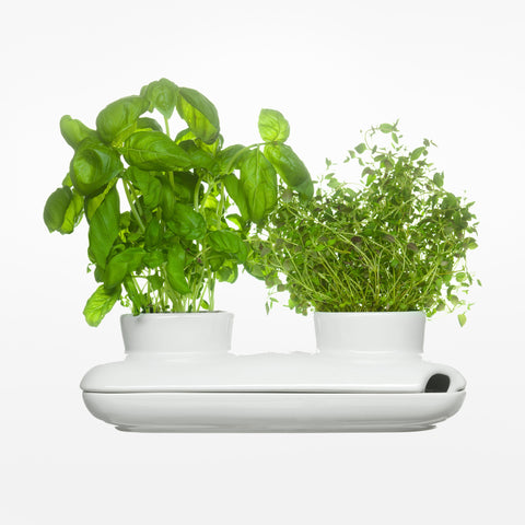 Herb Pot Duo