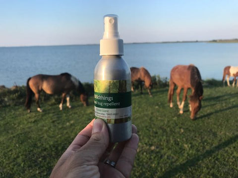 Wildthings bugspray in Assateague national Seashore, Wildthings natural bugspray, catnip insect repellent, catnip bugspray, best natural bugspray, best natural insect repellent