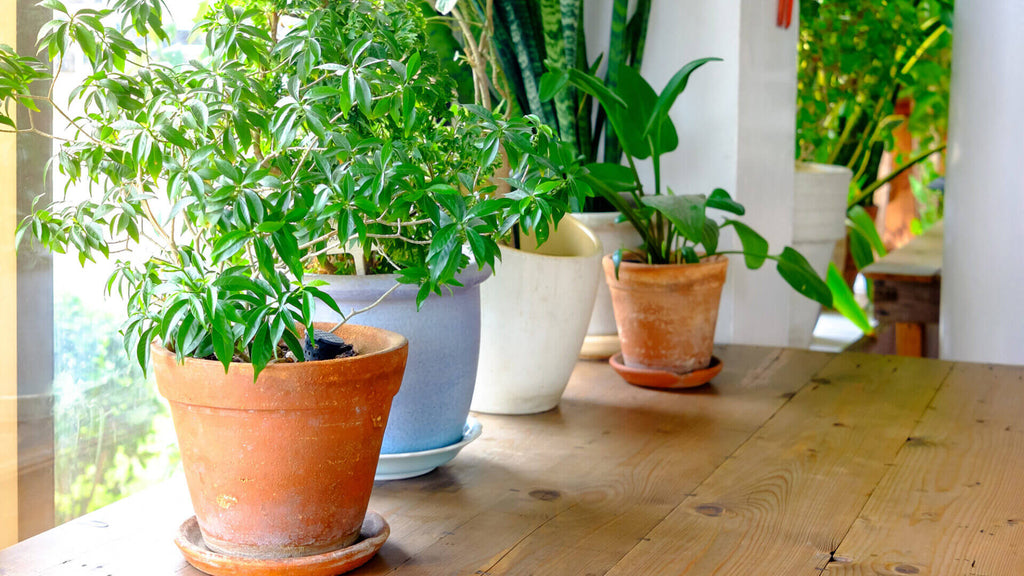 5 Best Plants for Cleaner Air