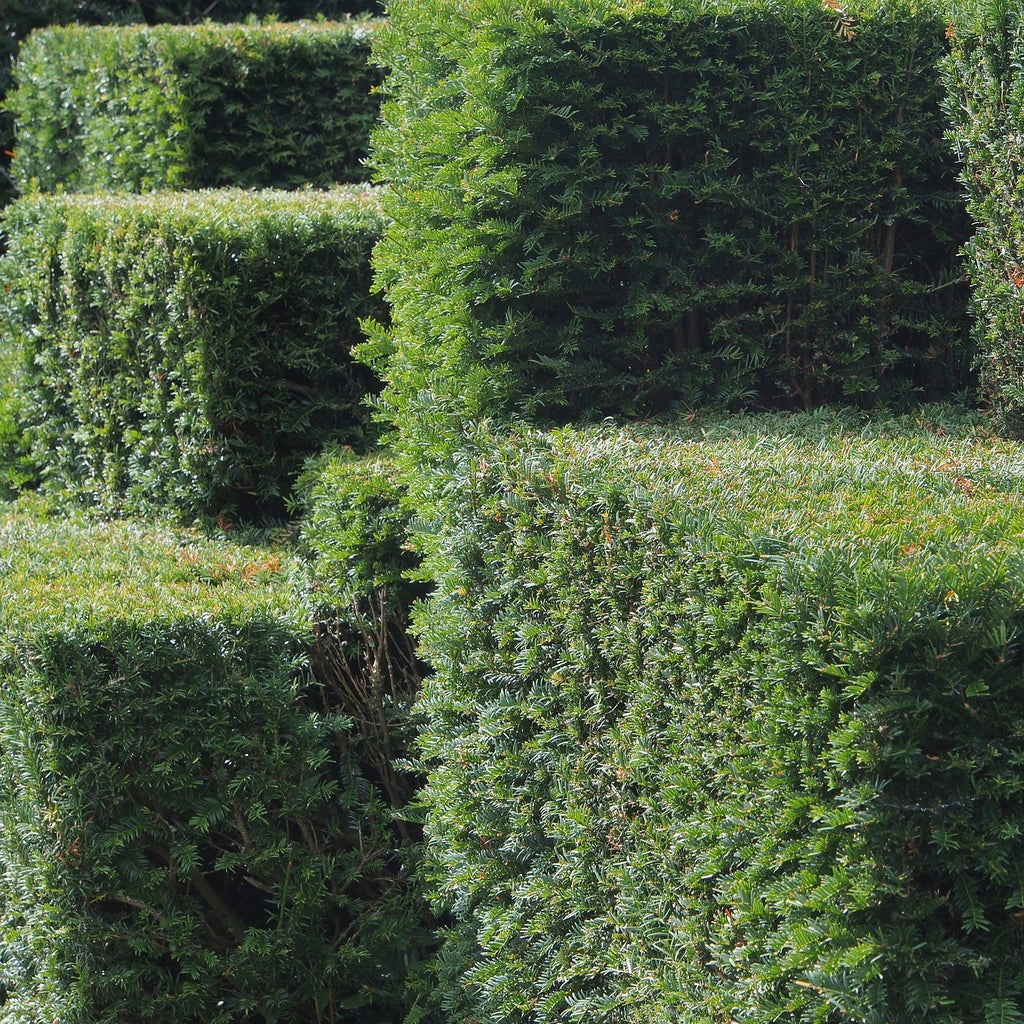 Topiary & Evergreen Standards