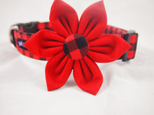 Load image into Gallery viewer, Dog Collar Flower Set Brawny