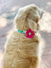 Load image into Gallery viewer, Dog Collar Flower Set Cacti
