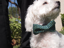 Load image into Gallery viewer, Dog Collar Bow Tie Set Polished