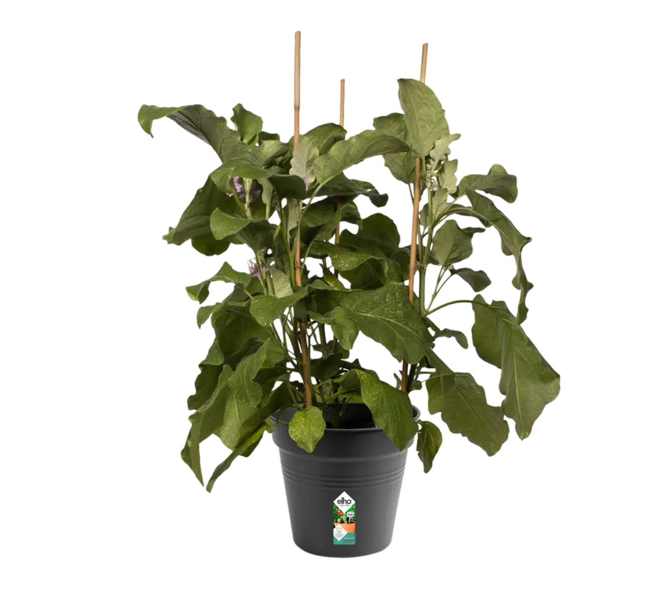 Easy Grow Pot 21cm