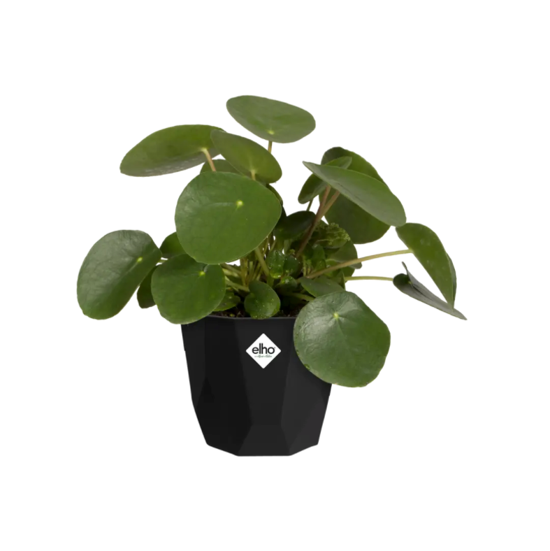 Geo Pot 14cm (Living Black)