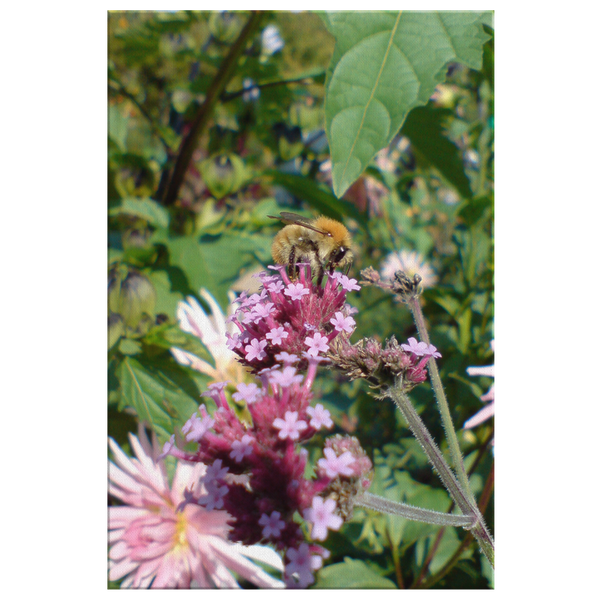 tired bee by James Balderson Canvas Wrap