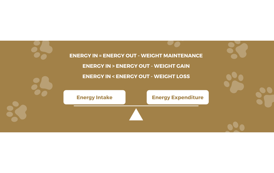 pet-hamper-energy-in-energy-out