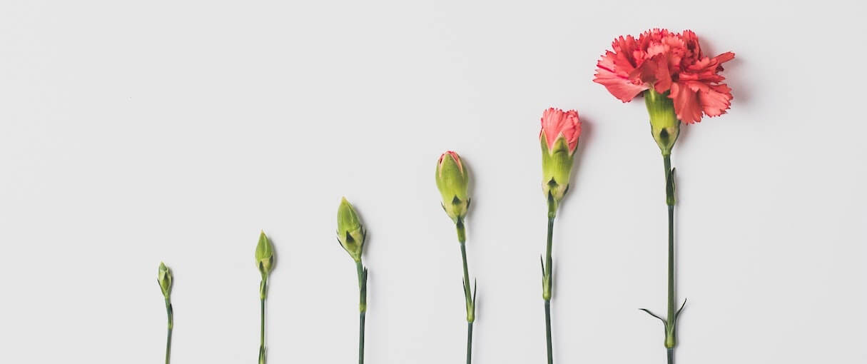 stages of a blooming flower represents app install growth over time