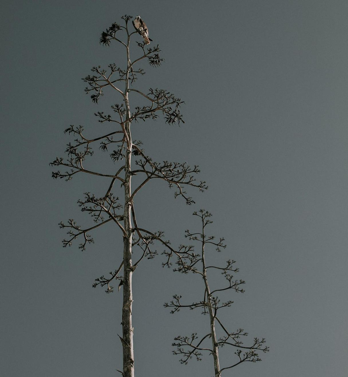 asymmetrical-design-tree-branches