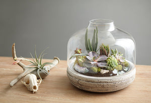 DIY Terrarium: Create a Mini Landscape in 6 Steps