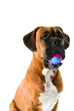 Planet Dog Orbee Tuff Orbee Ball Large