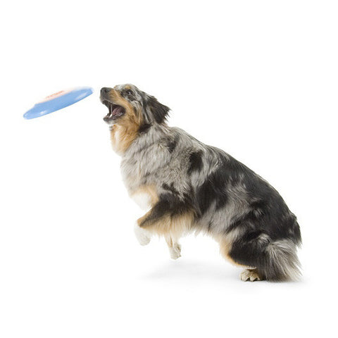 Planet Dog Orbee Tuff Zoom Flyer