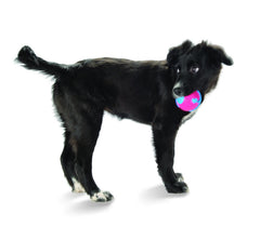 Medium Dog with Orbee Tuff Orbee Ball  Blue and Pink Medium