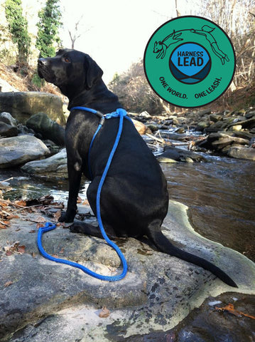 Harness Lead Blue