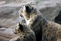 Mother and Cub by John Stahl