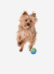 Small Dog Orbee Tuff Orbee Ball Blue and Green Small