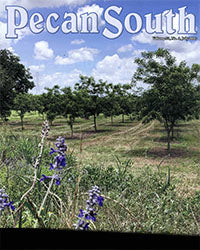 Pecan South magazine cover with Comal Pecan Farm